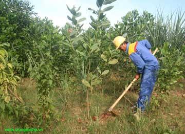 Những hàng cây xanh do cán bộ, kỹ sư, công nhân trên công trường trồng và chăm sóc góp phần tô thêm vẻ đẹp cho cuộc sống công trường.