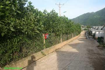 Những hàng cây xanh bao quanh những dãy nhà ở công nhân tạo nên một môi trường sống trong lành, tươi mát xua đi nắng gió, bụi bặm nơi công trường.
