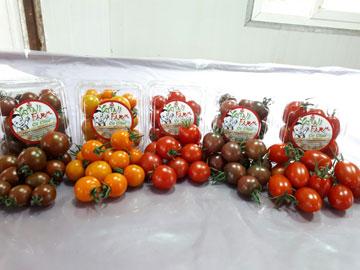 Sản phẩm Cà chua Nhật Bản tại YATTA FARM