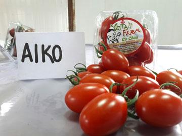Ca chua Đỏ AIKO